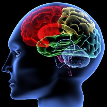 news brain depression